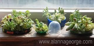 how to mother u0027s day recycled windowsill mini planter alanna