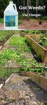 Best 25 Outdoor Garden Sink Ideas On Pinterest Garden Work 638 Best Gardening With Kids Images On Pinterest Gardening
