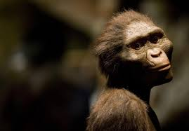 who is lucy the australopithecus five facts you probably didn u0027t