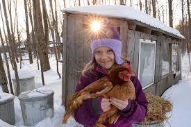 charlton milton tackle u0027backyard chickens u0027 the daily gazette