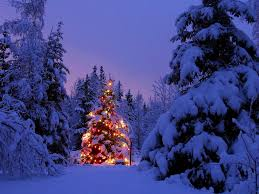 pretty christmas pictures free snowy christmas tree wallpaper