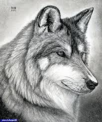 realistic wolf drawing how to draw a wolf head mexican wolf step