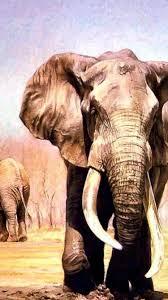 apple wallpaper elephant elephants wallpaper 118522