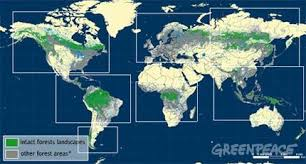 global map earth our disappearing forests greenpeace international