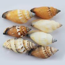 Shell Home Decor Shell Wedding Decorations Promotion Shop For Promotional Shell