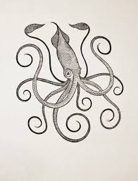 25 trending squid drawing ideas on pinterest pirate tattoo