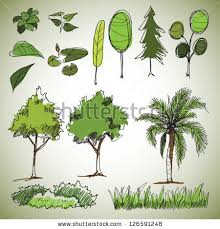 tree sketch stock images royalty free images vectors