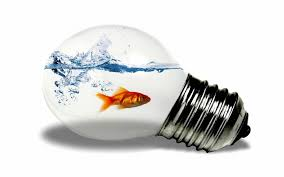 in light bulbs fish in the light bulb wallpapers and images wallpapers pictures