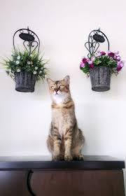 hukum memandulkan kucing hukum memandulkan kucing dalam islam alam kucing