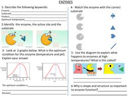 enzymes worksheet by cjbresources teaching resources tes