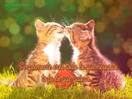 imagenes de gatitos sin frases imágenes de gatos con frases de amor para descargar gratis