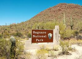 Arizona national parks images Saguaro national park arizona national parks rincon mountains jpg