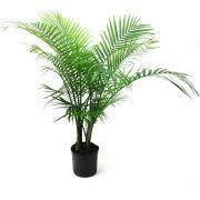 live indoor plants live indoor plants