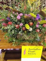 australian natives plants native plants www warragulgardenclub com