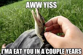 Cute Baby Animal Memes - cute baby crocodile
