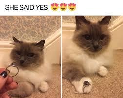Funny Animal Memes - funny animal memes 13 ladnow