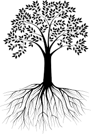 black and white tree silhouette with roots vectorstock trees