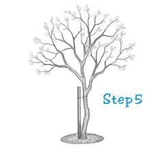 how to draw a tree beginning sketch2draw