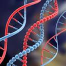 الحمض النووي في السنة!