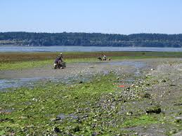 Wetland Resources Of Washington State by Tulalip Tribes Natural Resources Programs U2013 Shellfish
