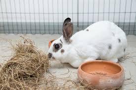 rabbit bunny rabbit binkies your bunny is jumping from