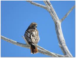 march 2015 u2013 amy u0027s birds