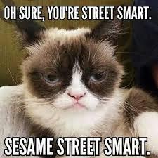 Sleepy Memes - pin by vickie on make me laugh pinterest grumpy cat hilarious