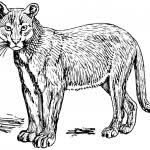 mountain lion clipart mountain lion silhouette clipart