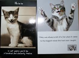 Funny Cat Birthday Meme - news lol tv funny cat birthday cards