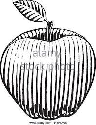 woodcut apple stock photos u0026 woodcut apple stock images alamy