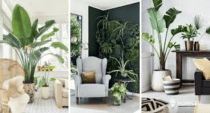 home interior plants why indoor plants are the best home décors you should