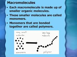 chapter 2 biomolecules ppt download