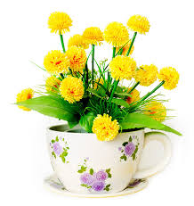 image of spring flowers spring clipart spring flower pictures spring flower clipart