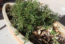 low water herbs for your garden or kitchen u2013 gardening in a drought