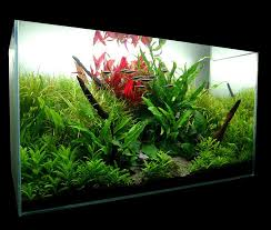 Aquascape Fish Choosing Aquarium Size For Aquascaping Aquascape Aquarium