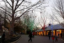 national zoo christmas lights trip report national zoo in washington d c the gatethe gate
