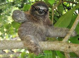 Sexy Sloth Meme - sexy sloth quickmeme
