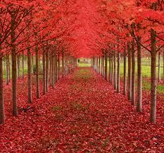 trees dusky s wonders