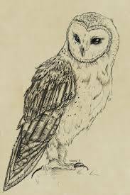 a drawing of an owl best 25 owl drawings ideas on owl