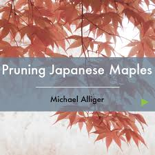 japanese online class pruning japanese maples learn online