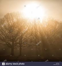 sun through the trees at berkshire uk stock photo