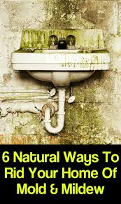 Mold Smell In Bathroom 6 Natural Ways To Rid Your Home Of Mold U0026 Mildew