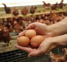 chambre d agriculture lorraine fait du jour un casse tête d œuf
