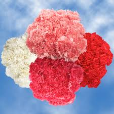 bulk carnations bulk s day carnations global