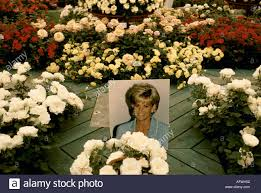 Diana Princess Of Wales Rose by Chelsea Flower Show Princess Diana Roses 1997 Princess Diana Of