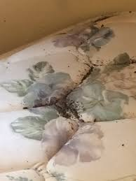 Can Bed Bugs Kill You Plague Sweeping America Striking Multiple Cities U2014find Out If Your