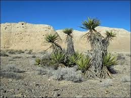 Tule Springs Fossil Beds National Monument 25 Best Southern Nevada Outdoors Images On Pinterest Nevada