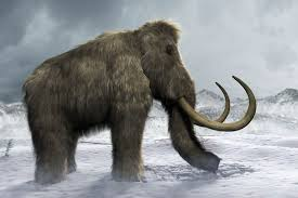 10 facts wild woolly mammoth