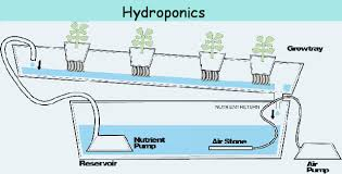 texas feasibility study of hydroponic vegetables in southwest