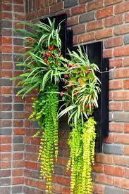 Spider Plant by 51 Best Spider Plants Images On Pinterest Garden Ideas Head